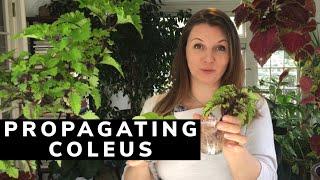 🌱 How to Propągate Coleus ~ Y Garden 🌱