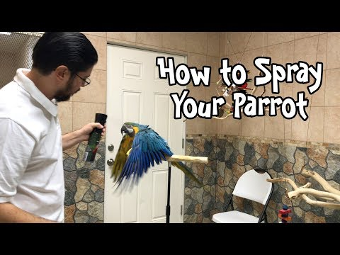 Proper Way To Spray Mist Your Parrot