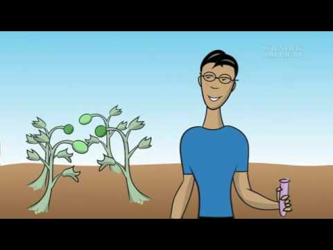 What Is a Genetically Modified Food