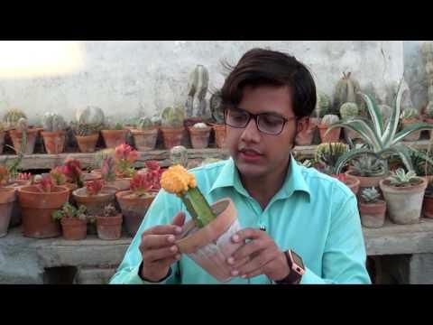 Cactus Grafting & care