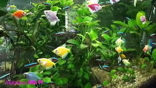 Неоновая Рыбка  Голубой неон Аквариумные Рыбки Neon Fish Blue Neon