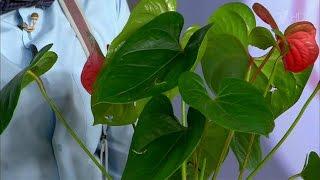 видео Опасные для детей комнатные цветы | GidBaby.ru - беременность, роды, развитие ребенка