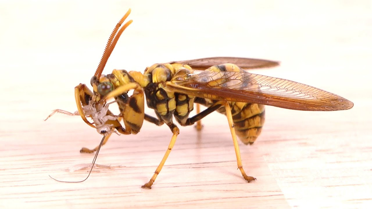 カマキリとスズメバチを合成した虫がヤバすぎる