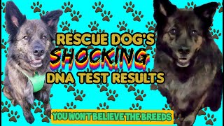 Embark DNA: Rescue Dogs SHOCKING results 😱