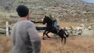 #sherTv       #Loshadi Обучение лошади Новосибирск
