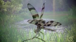 Dragonfly World