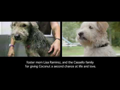 IFAW Mexico: Coconut the dog has found his forever home