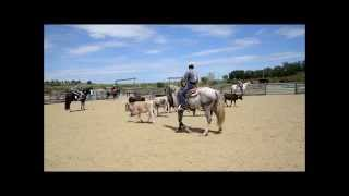 Stage tri de betail ranch Cow sense