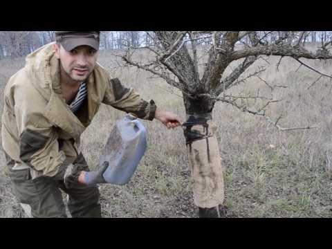 ловля кабанов на петлю