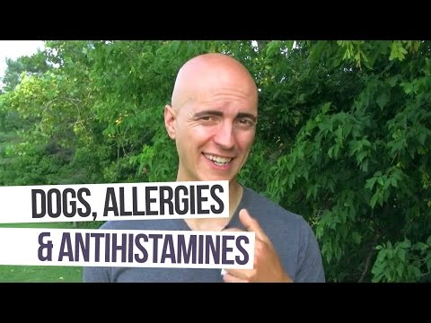 Dogs, Allergies, and Antihistamines