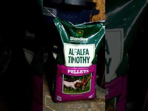 Feeding A Senior Horse Quality On A Budget