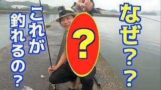 マゴチ釣りをしていたら超意外なアレが釣れた!! thumbnail