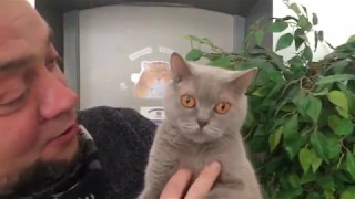 Муркафе. Кошки в Окошке, Кафе для Добрых людей в Туле. Часть 2