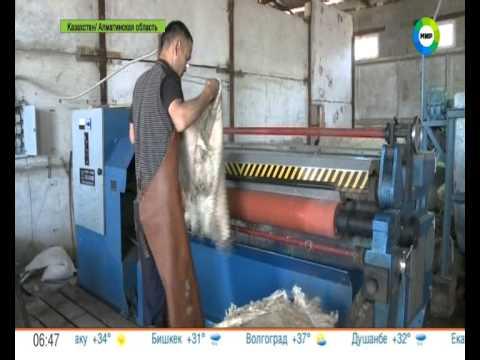 Завод первичной обработки шерсти. Рубрика Наше лучше!