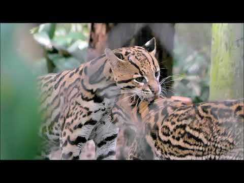 Santa Fe College Teaching Zoo Tour