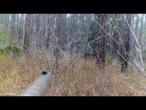 FLORIDA OSCEOLA TURKEY HUNTING On Public Land
