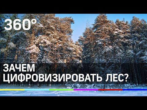 Чему Подмосковье научит лесные хозяйства России