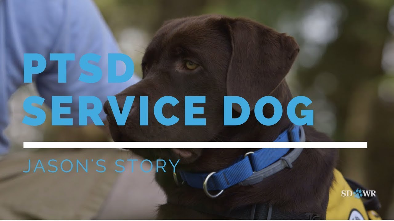 Service Dogs By Sdwr Autism Diabetes Ptsd Service Dogs Service