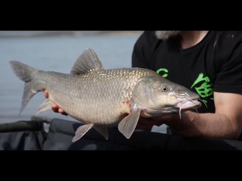 alange barbel fishing