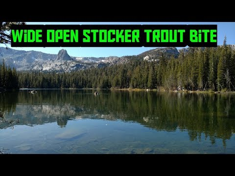 Stocker Trout Fishin | Lake Mamie | Mammoth Lakes |  2019