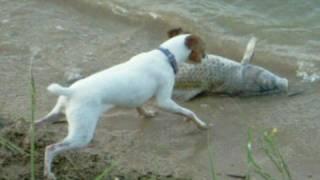 Dog vs. Fish