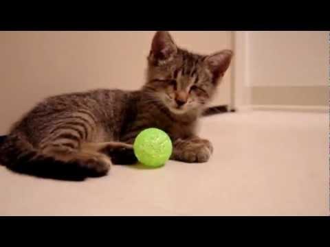 chú mèo mù lần đầu tiên được chơi đùa :(