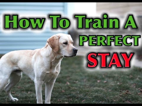 How To Teach Your Dog To STAY Perfectly!