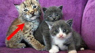 Бабушка ПОТЕРЯЛА дар речи, когда среди котят домашней кошки она увидела нечто НЕОЖИДАННОЕ!