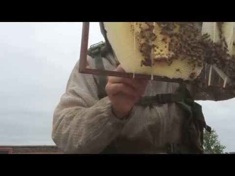 Rare Exposed Bee Hive Removal From Roof of Providence Cristo Rey High School 2014