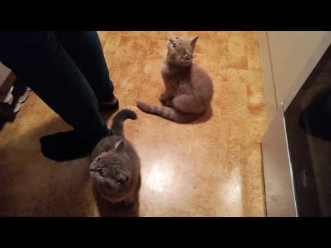 Starving kittens meowing - no food 6 hrs straight!