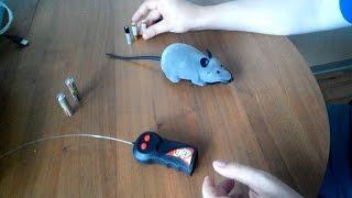 Радиоуправляемая мышка для игры с кошкой из Китая: обзор и испытания