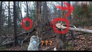 Terrifying Return To Bigfoot Sasquatch Gifting Tree Reveals Horrific Discovery