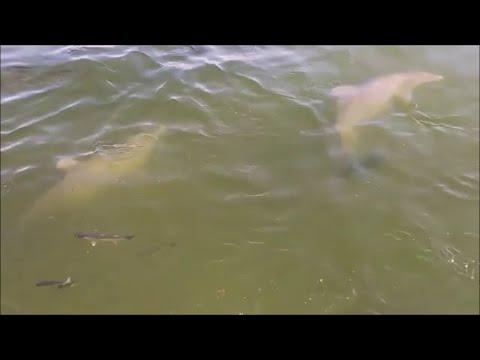 Dolphin Buffet  || ViralHog