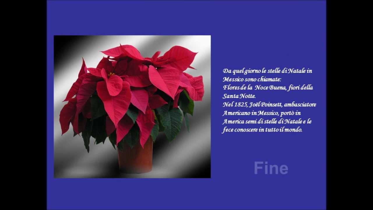 Significato Della Stella Di Natale.Testo Della Canzone Stella Di Natale Disegni Di Natale 2019