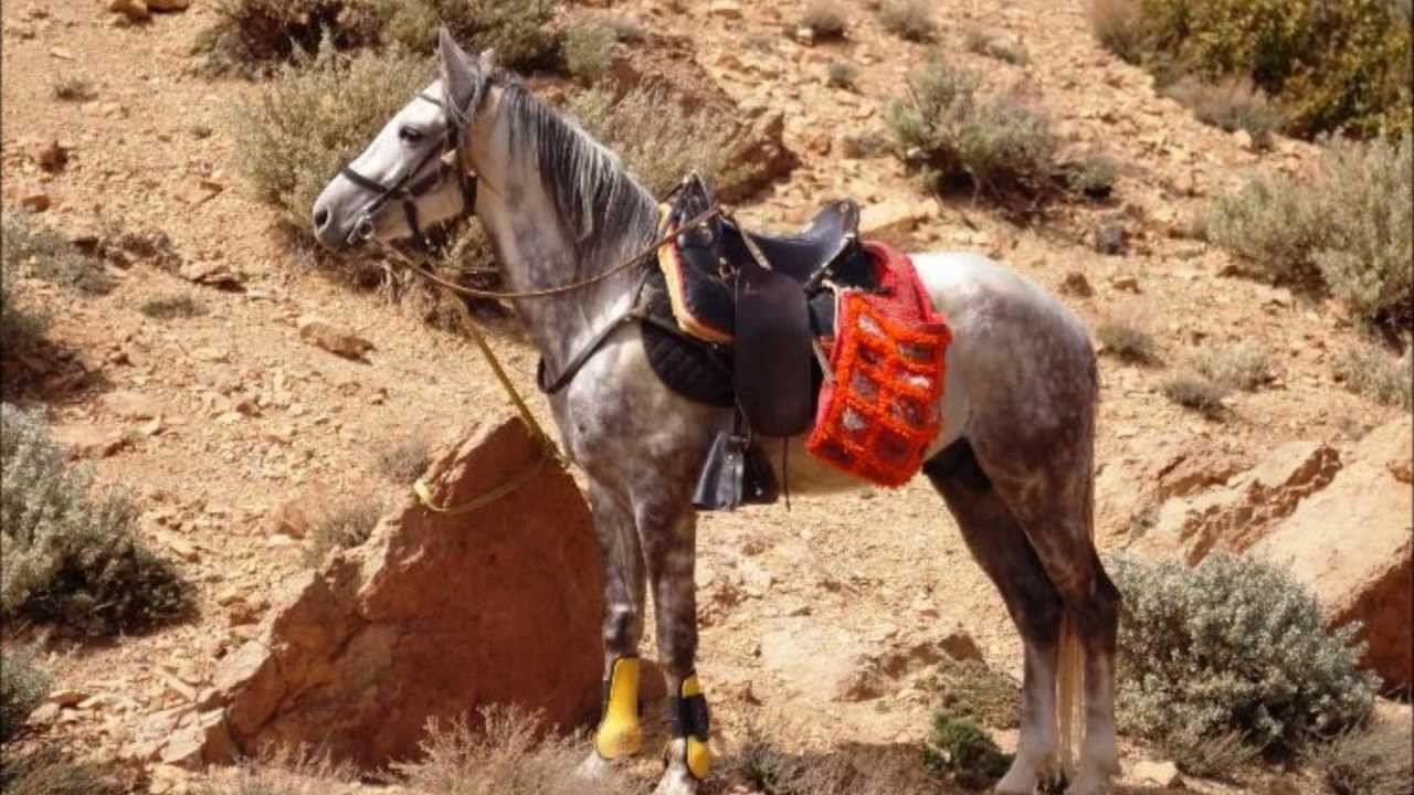 Girl Scouts | For Girls | Travel » Colorado Equitrekking