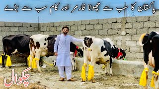Sharjeel khan chakwal | 5 Australian cows | Sab se chota farmer or sab se bare kaam