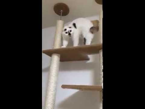 異様な声で喋りだす猫