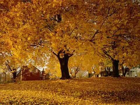 Wallpaper Leaves Falling Doris Day Autumn Leaves 1956 Youtube