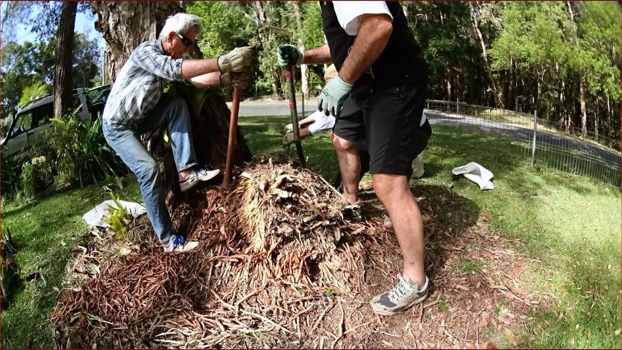 ASPARAGUS WEED CONTROL 10: Asparagus macowanii or pom pom asparagus ...
