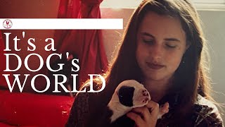 Vlog#20: A Dogs World