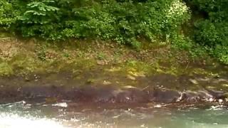 白馬アドベンチャークラブ 水遊び 2010.7.26