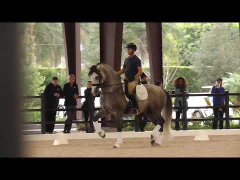 Olympian Robert Dover Riding A PRE Horse