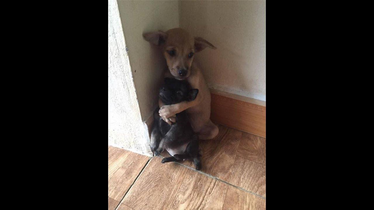 Обнимающиеся бездомные щенки из буддийского храма во Вьетнаме покорили весь мир!