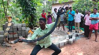 Vava Suresh Catching 170th Kingcobra at Thenmala