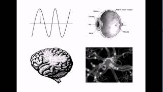 Gambar cover Non-Physical Properties of the Mind? Qualia #1: Introduction