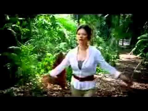 visa-card-commercial-orangutans-in-jungle--cute!