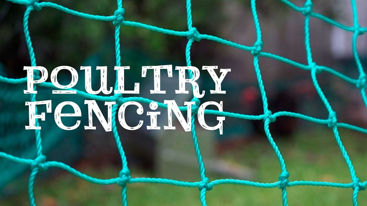 Poultry Fencing - Free range chickens in your backyard! - YouTube
