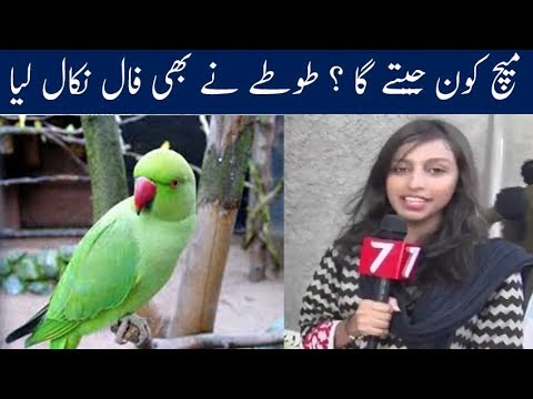 Parrot Predictions | Who will win Champions Trophy ? India or Pakistan