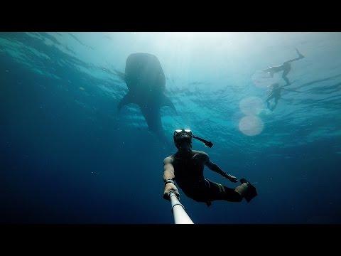 GoPro HERO4: Swimming with Gentle Giants