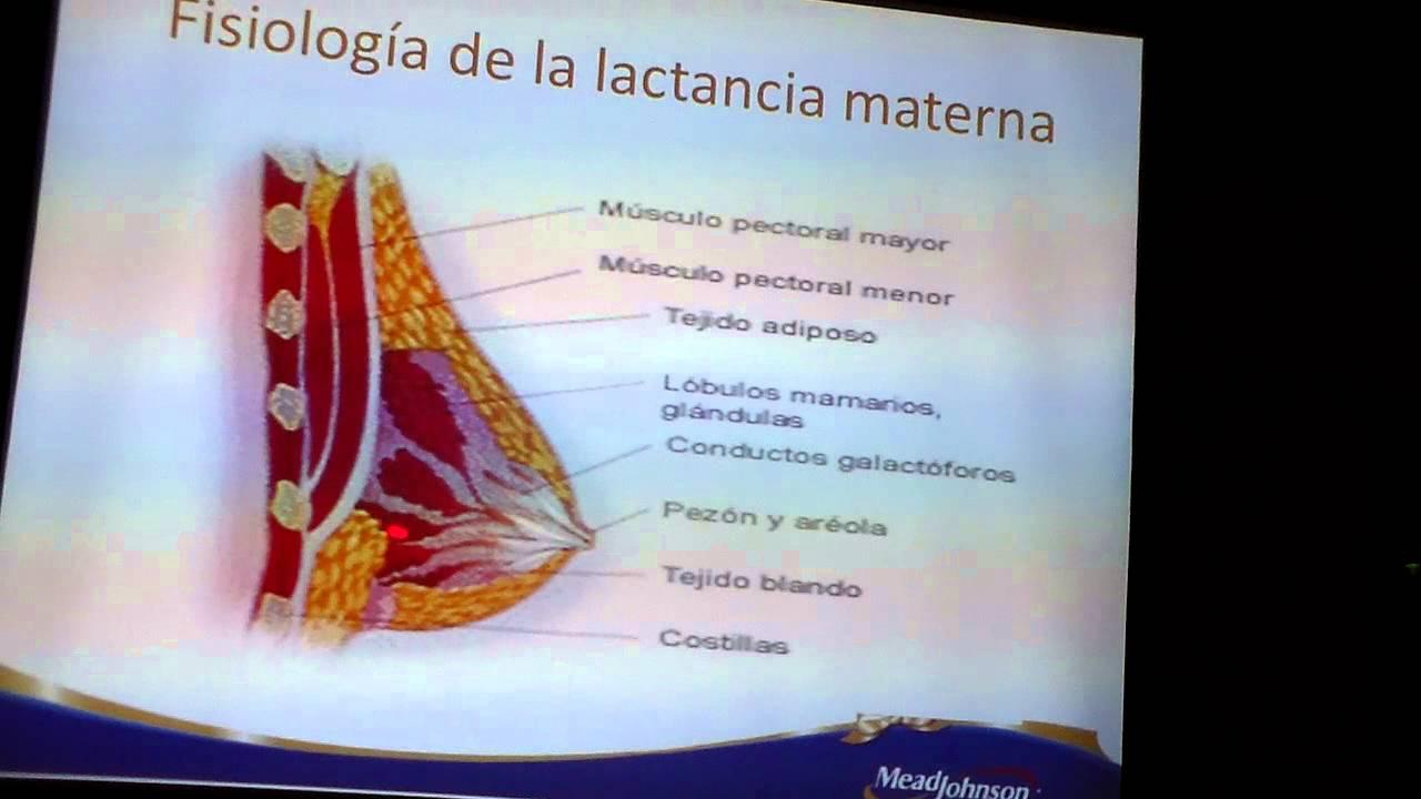 FISIOLOGÍA DE LA LACTANCIA MATERNA - YouTube